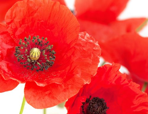 Defence Forces – Poppy Service